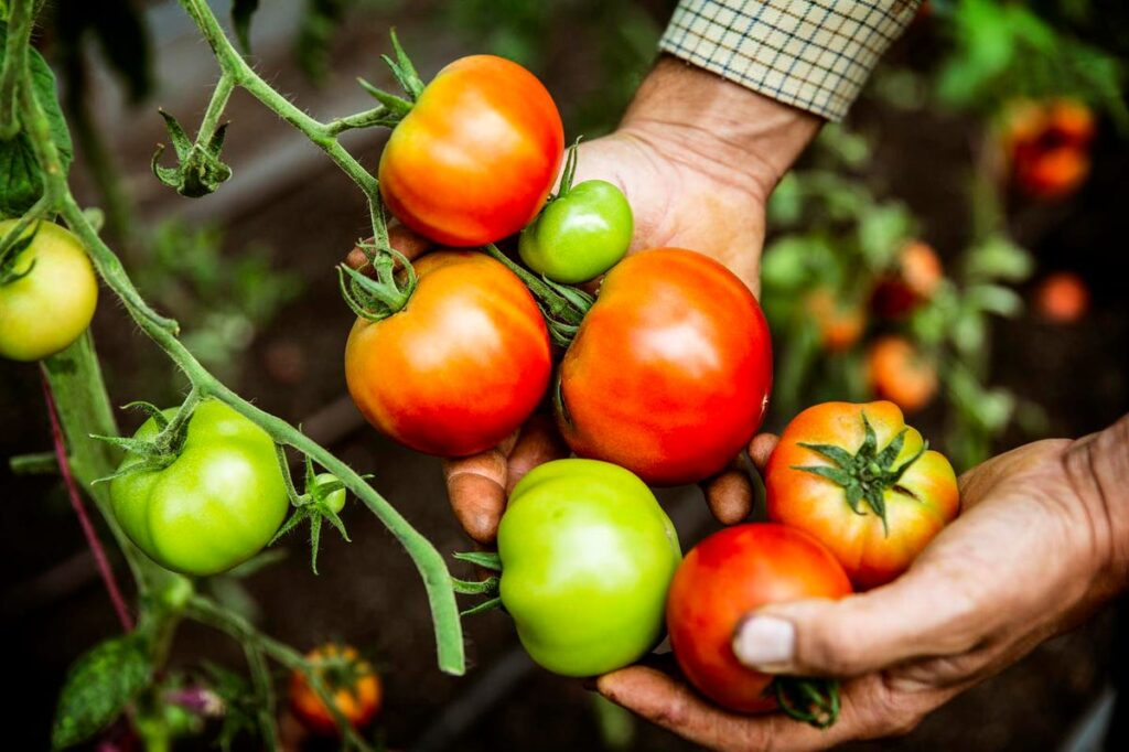 The Gardener And The Tomato Plant: Harvest Your Business's Value